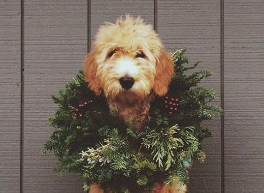 no me gusta la navidad
